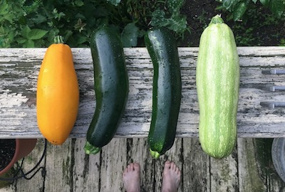 summer squash to grow